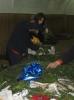 Adventni venčki 2005